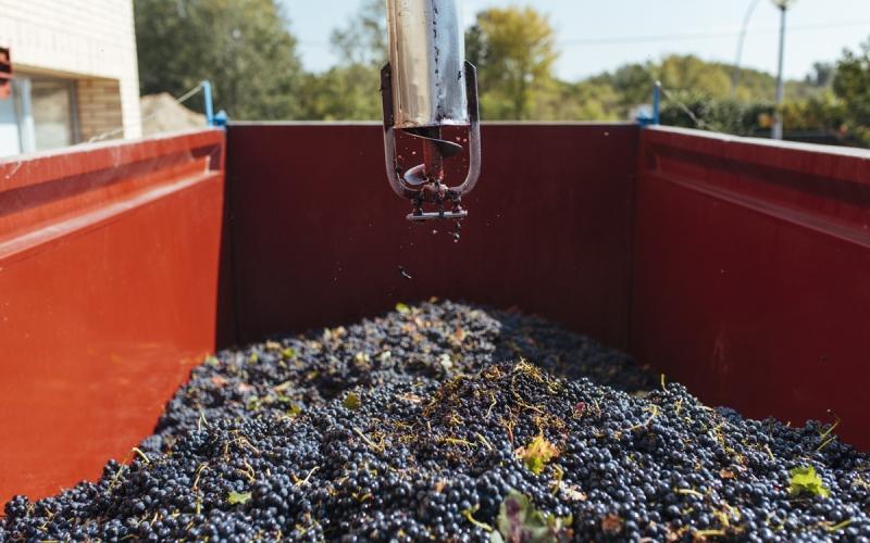 La patronal quiere retrasar el convenio vinícola hasta después de la vendimia